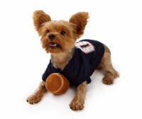 The ET-300 for Small Dogs - Yorkshire Terrier.jpg