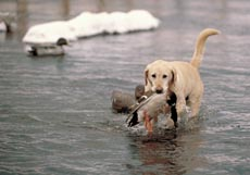 Fully Waterproof for the waterfowl hunter