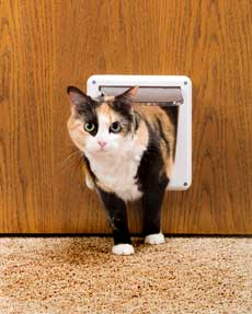 P1-4W-11 Deluxe 4-Way Cat Flap